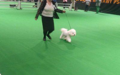 DOG SHOW WARSZAWA